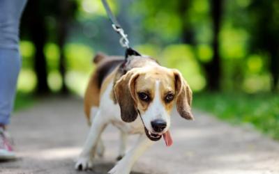 Otroci in psi – varno sobivanje